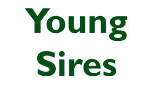 Young Sires